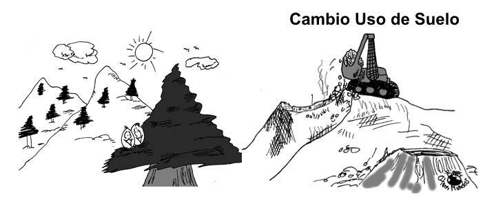 CambioUsoSuelo